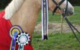 Light Coloured Horse wearing a Quality Rosette